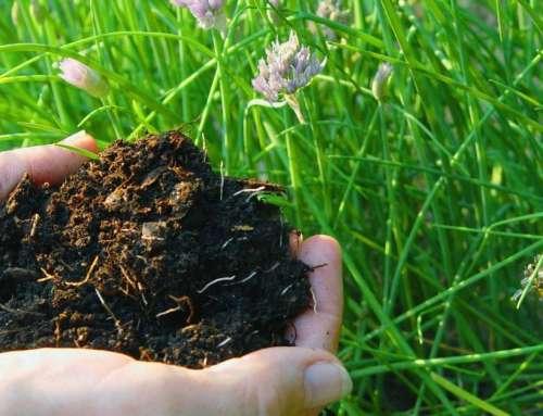 5 razones para compostar en tu casa